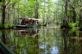 Bayou Swamp Tours Site