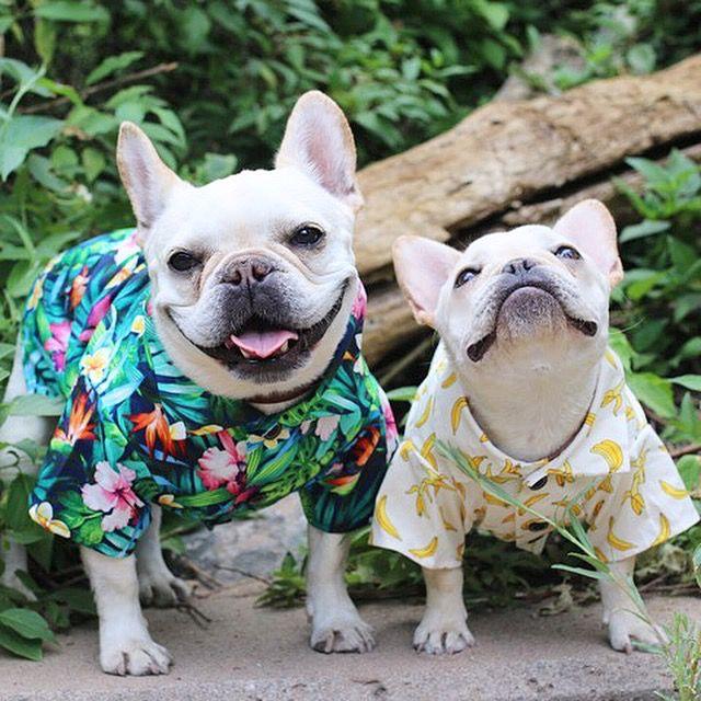 Pet garments shopping